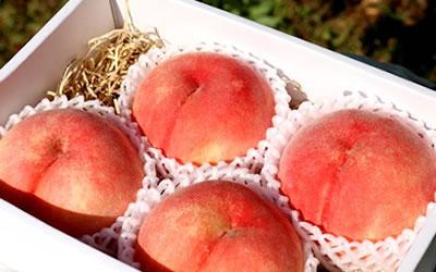 桃の収穫時期について