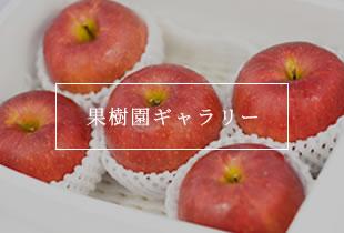 果樹園ギャラリー