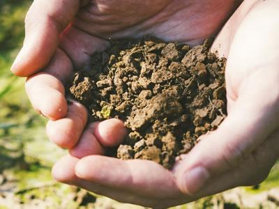 02 科学肥料を使用しない栽培
