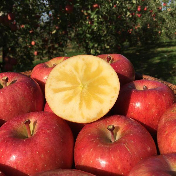 オススメりんご「こうとく」