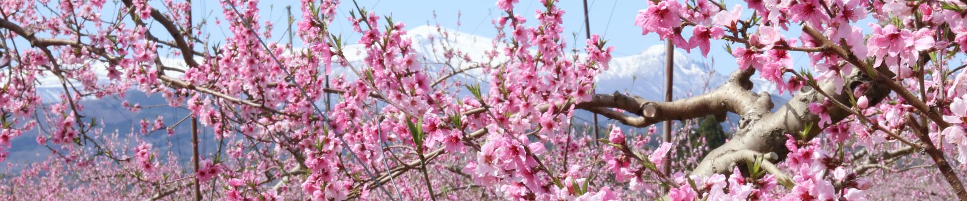 太田果樹園